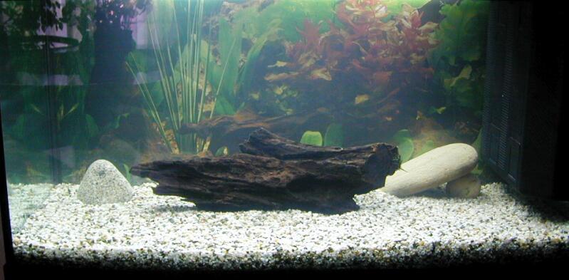 Sassi acquario cemento armato precompresso for Arredo acquario acqua dolce
