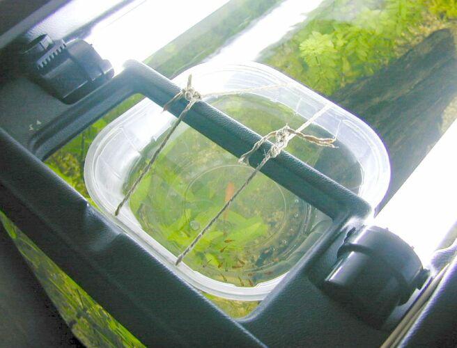 15 litri gli avannotti di renato chiesa for Comprare un acquario