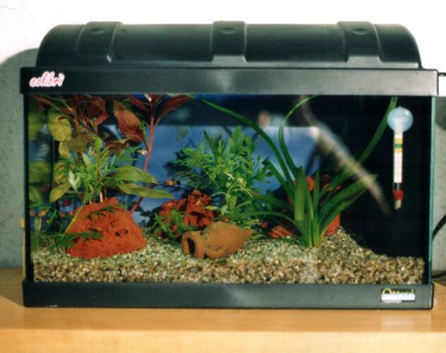 15 litri gli avannotti di renato chiesa for Acquario per tartarughe grandi