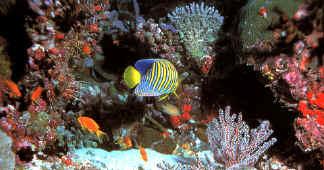 Guida all 39 acquariofilia di renato chiesa for Pesci per acquario tropicale